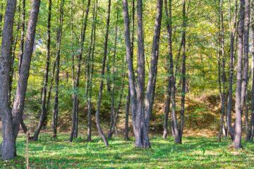 Olšový les