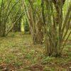 Kopicovaný les