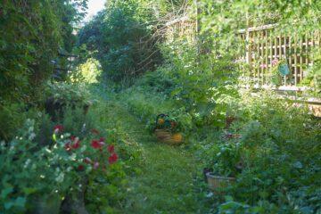 fotka jedlého živého plotu v permakulturní zahrádce_naturhelp
